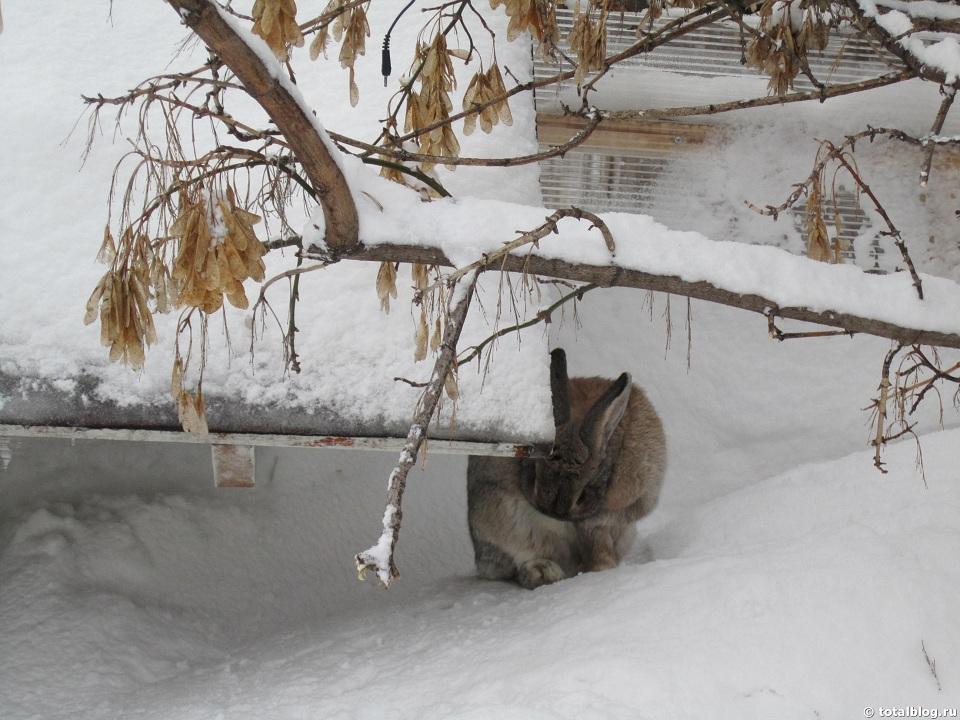 Кролик в Парке Горького